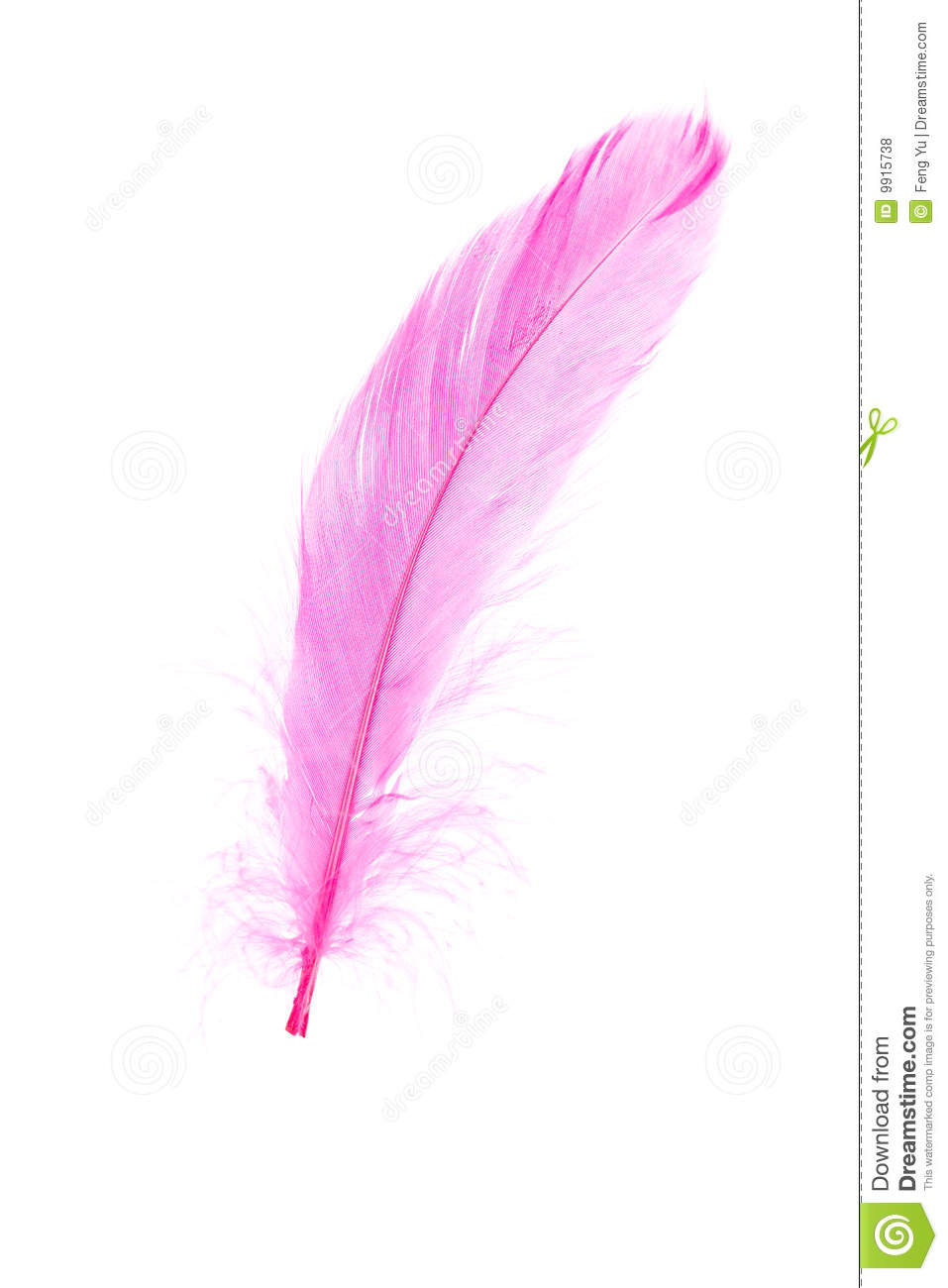 Pink Feather Royalty Free Stock Photos Image 9915738
