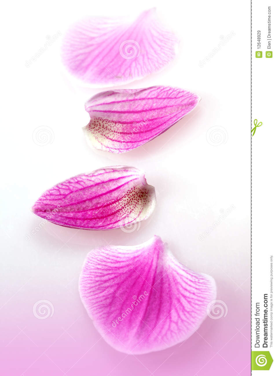 Pink Petals Of Flower Orchid Stock Image Image Of Botany
