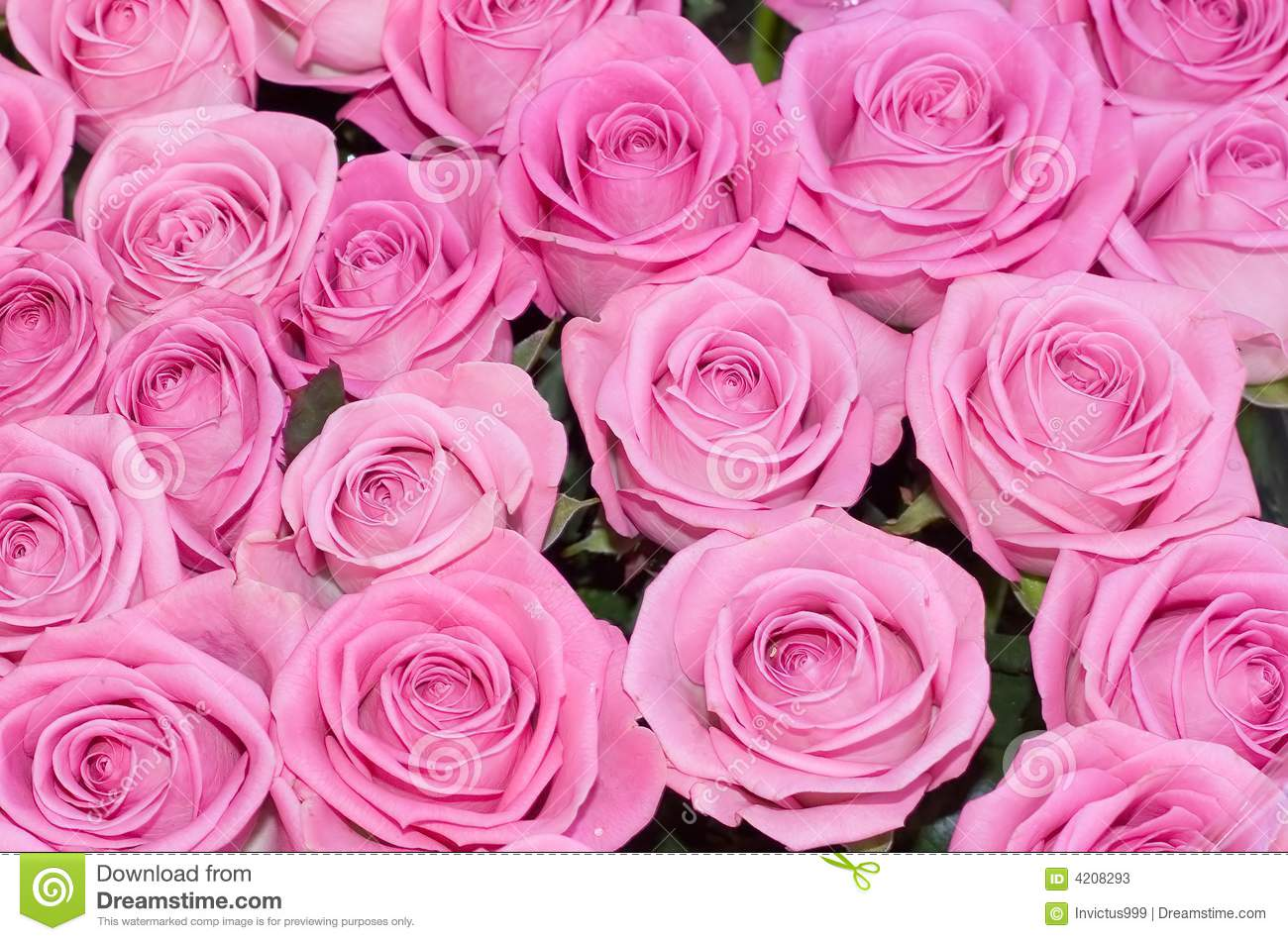 Iphone X Stock Wallpaper Live Pink Roses Background Of My Floral Backgrounds Stock
