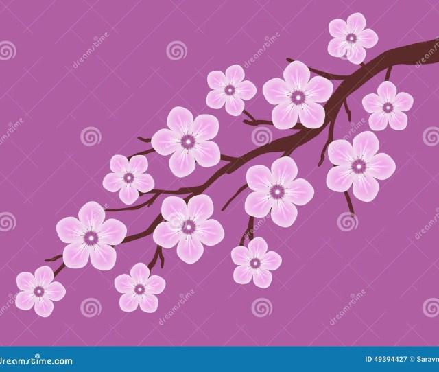 Pink Sakura Cherry Blossom Branch With Dark Pink Background Illustration