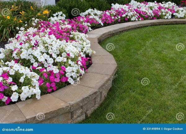 pink and white petunias stock