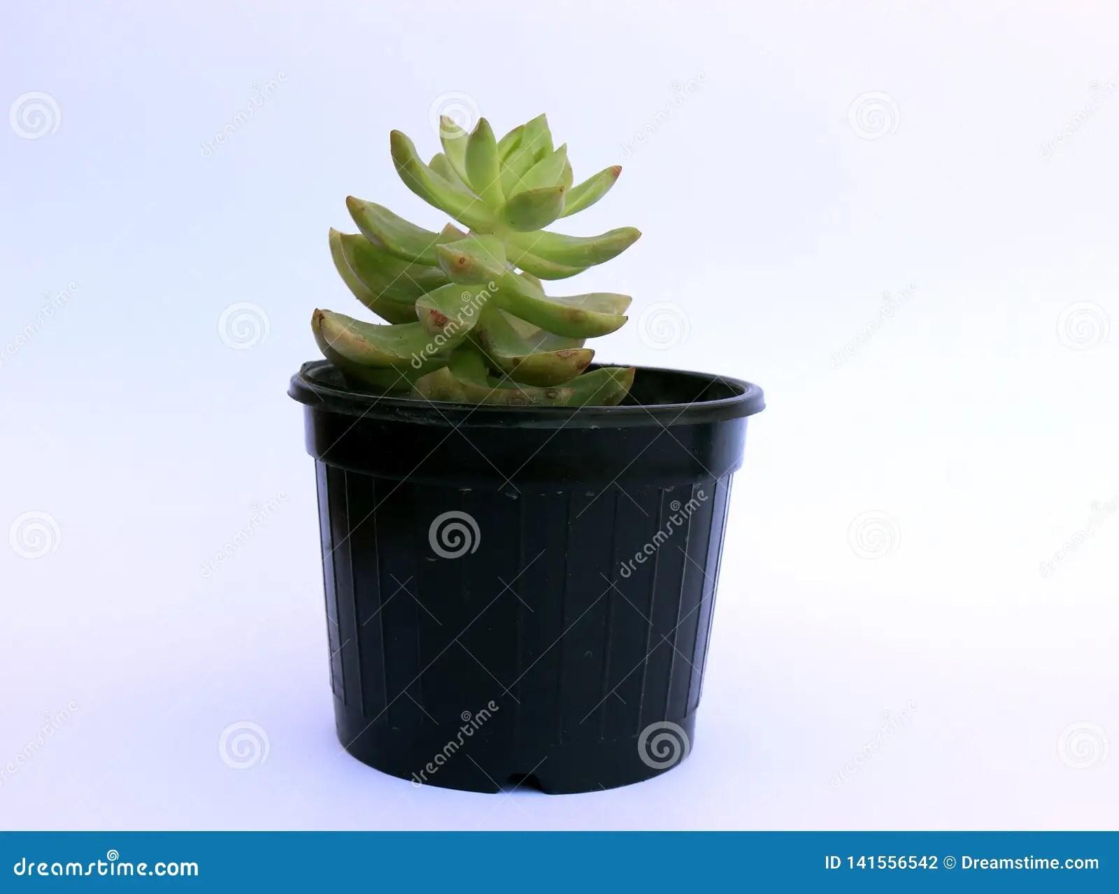 Indoor Flower Pot Decorate Your House Stock Photo Image Of Pots Garden 141556542