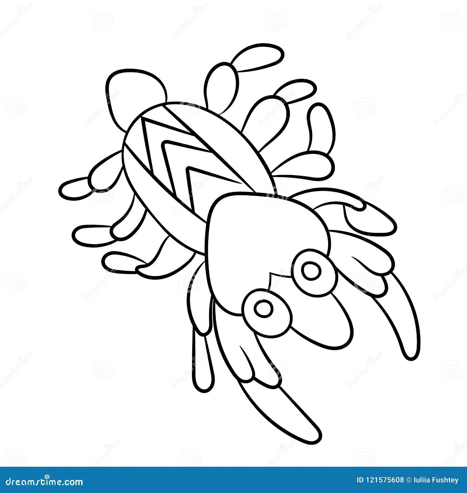 Shrimp Coloring Book. Small Marine Cancroid. Ocean