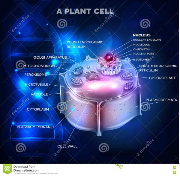 Plant Cell DNA Structure