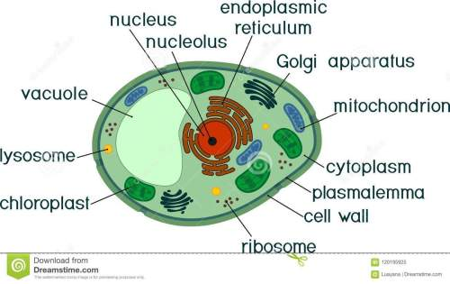 small resolution of plant cell structure with titles stock vector illustration of rh dreamstime com cell phone components diagram cell phone parts diagram