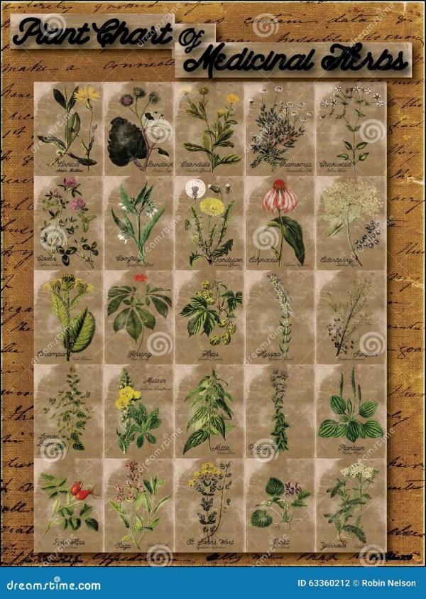 Plant Chart Of Medicinal Herbs 1 Stock Illustration