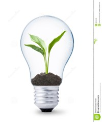 Plant Growing Inside A Lightbulb Stock Photo - Image of ...