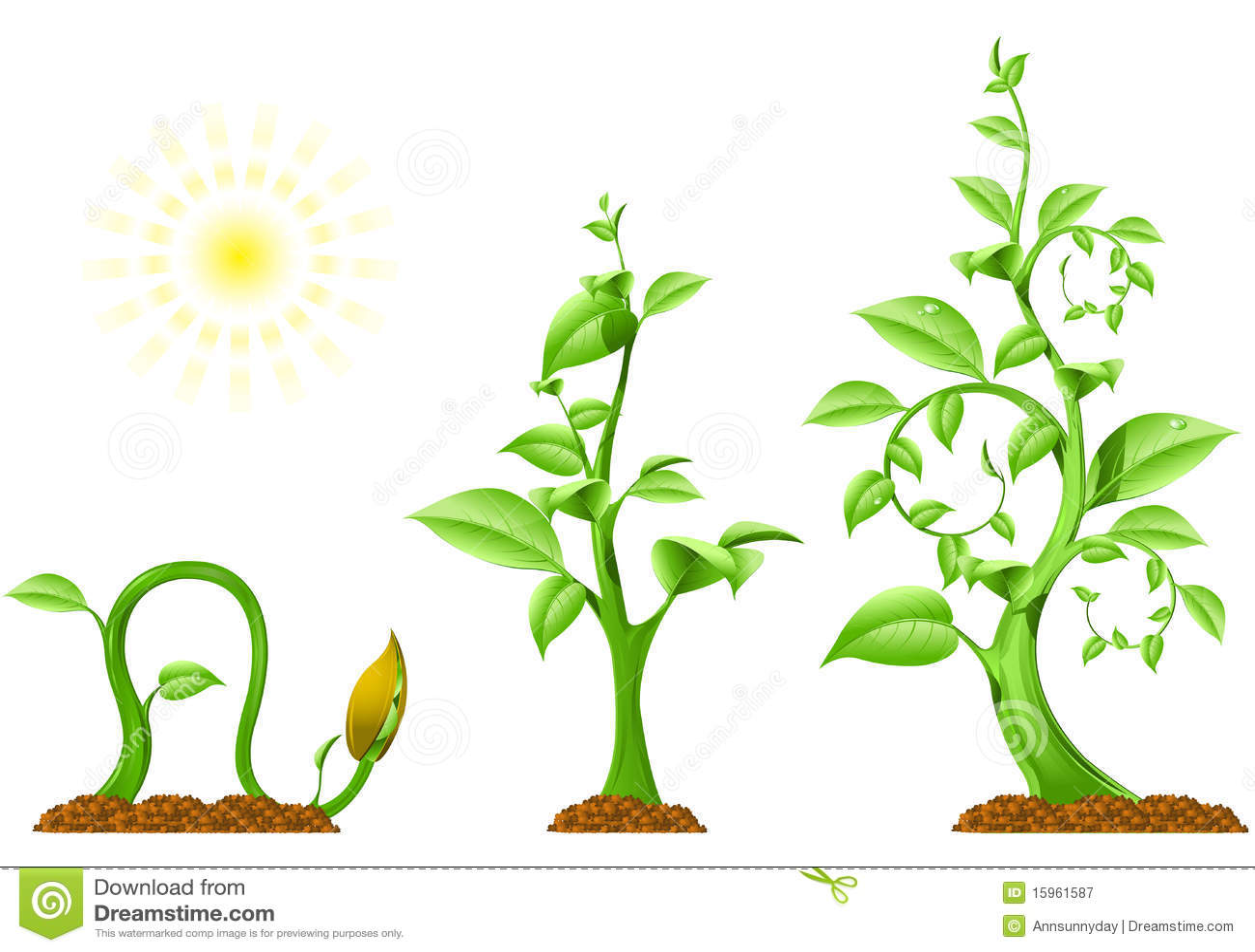 Plant Growth Cartoon Vector