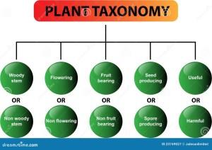 Plant Taxonomy Diagram  Vector Stock Vector