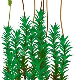 common haircap stock illustrations 17 common haircap stock illustrations vectors clipart dreamstime [ 675 x 1300 Pixel ]