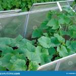 Plastic Raised Beds With Cucumbers In Medieval Style Garden Stock Image Image Of Herb Natural 134845663