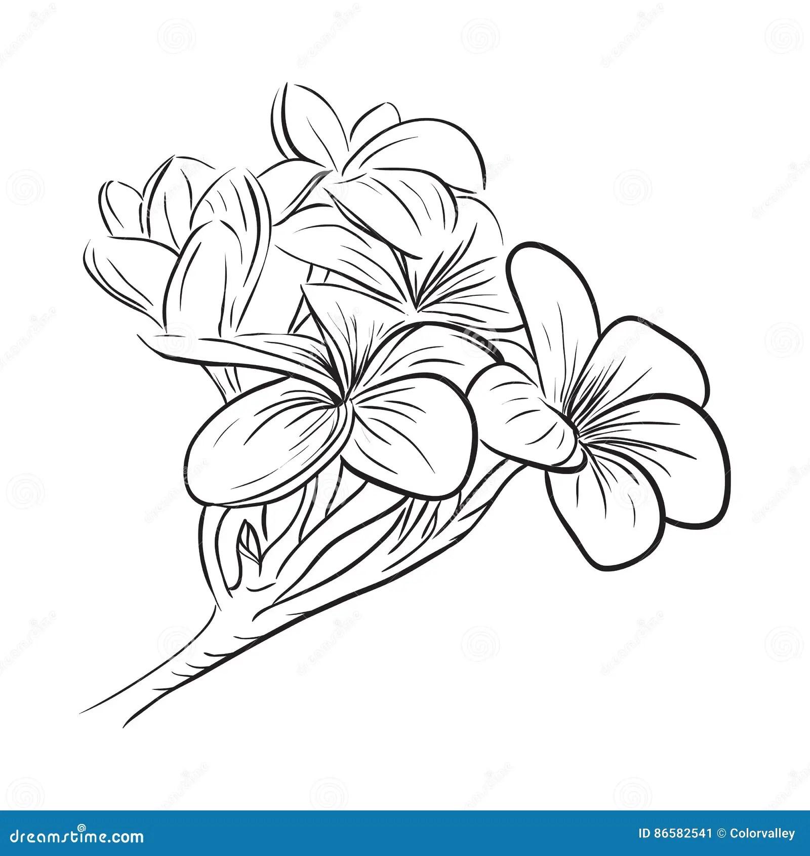 Plumeria Frangipani Tropical Flower Icon Stock Vector