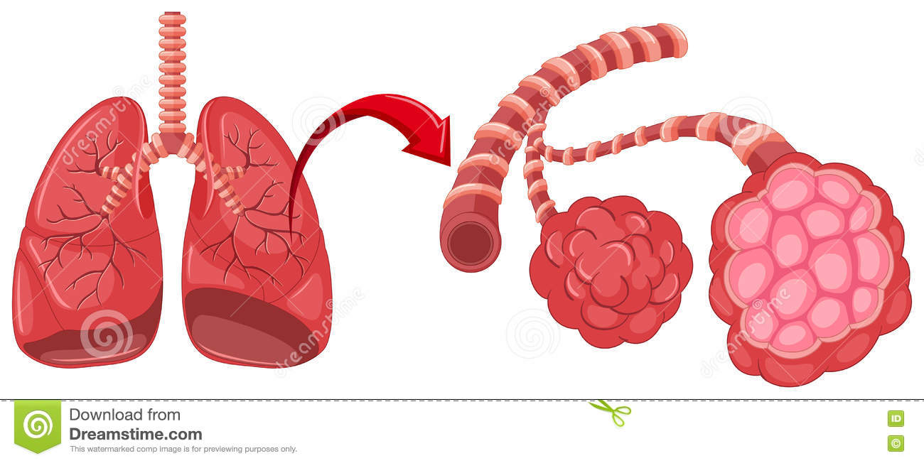 hight resolution of pneumonia diagram with zoom in lungs