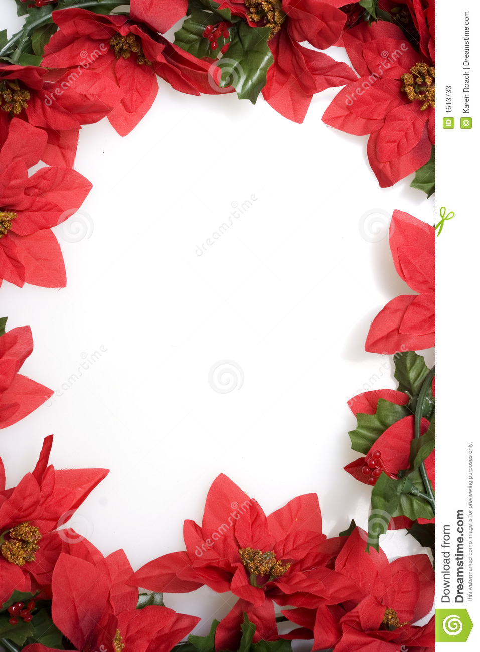 Fall Flowers Wallpaper Free Poinsettias Background Over White Stock Image Image 1613733