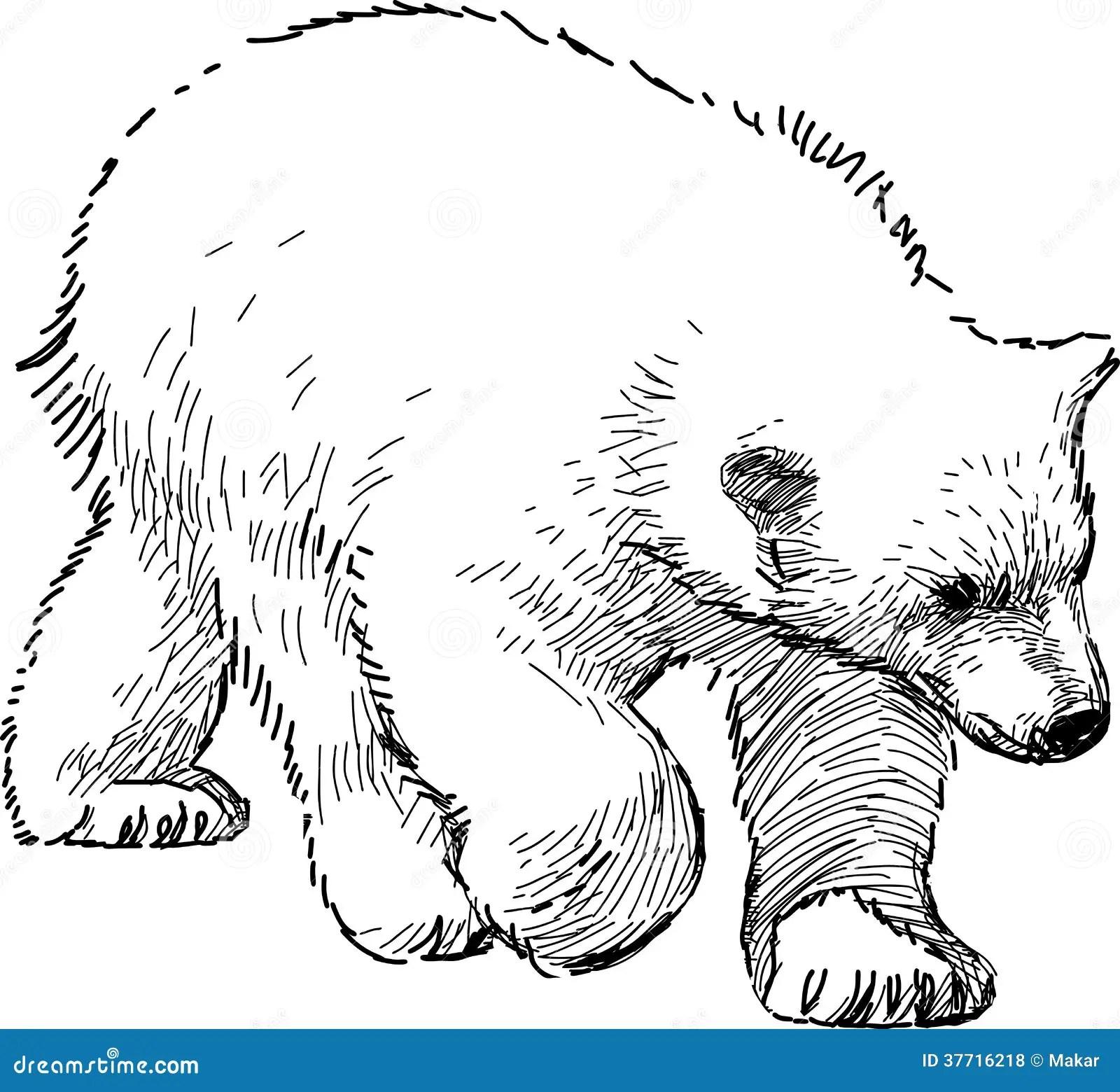 Polar Bear Cub Stock Vector Illustration Of Bear Wild