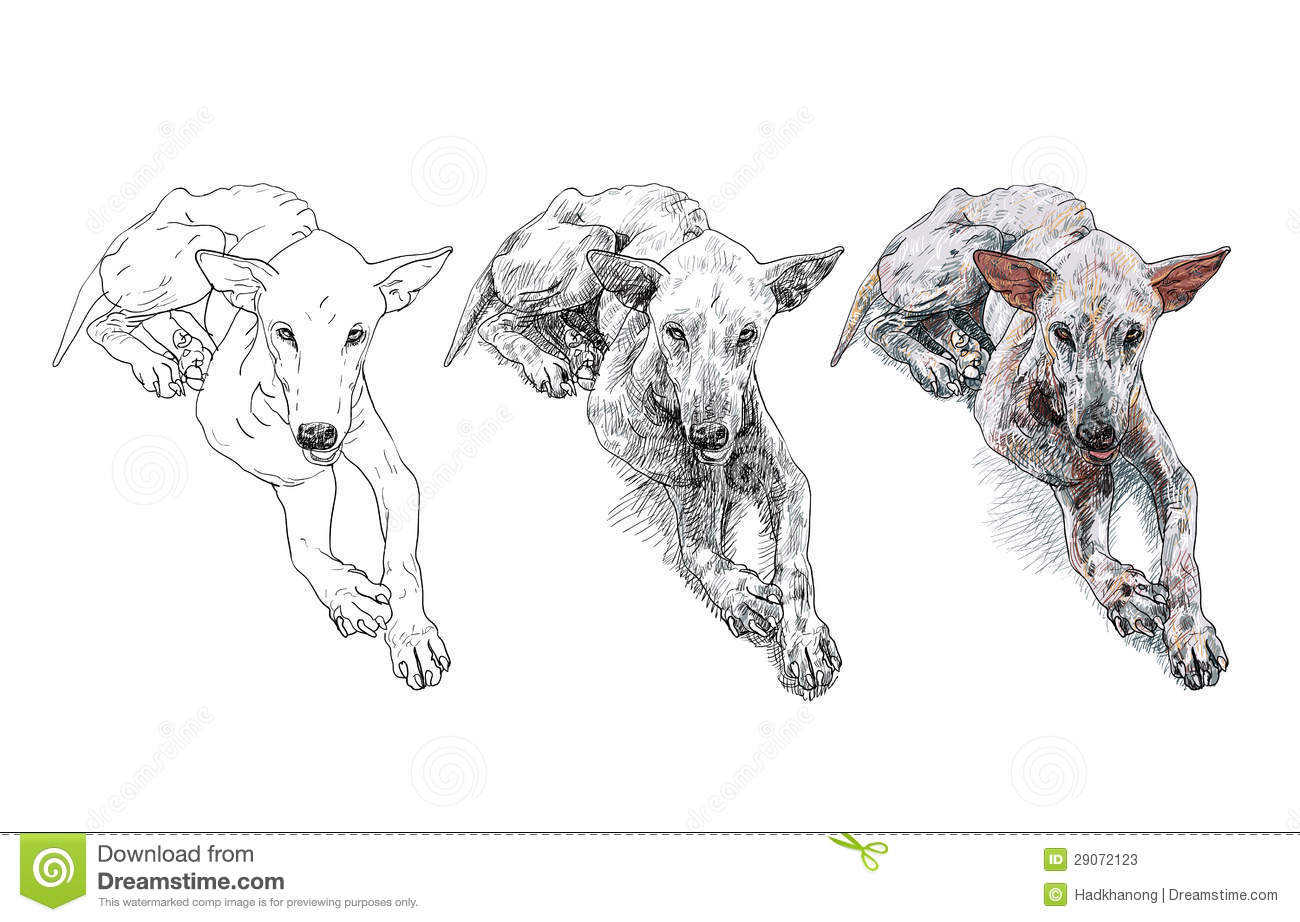 The Poor Old Mangy Dog Stock Vector Illustration Of