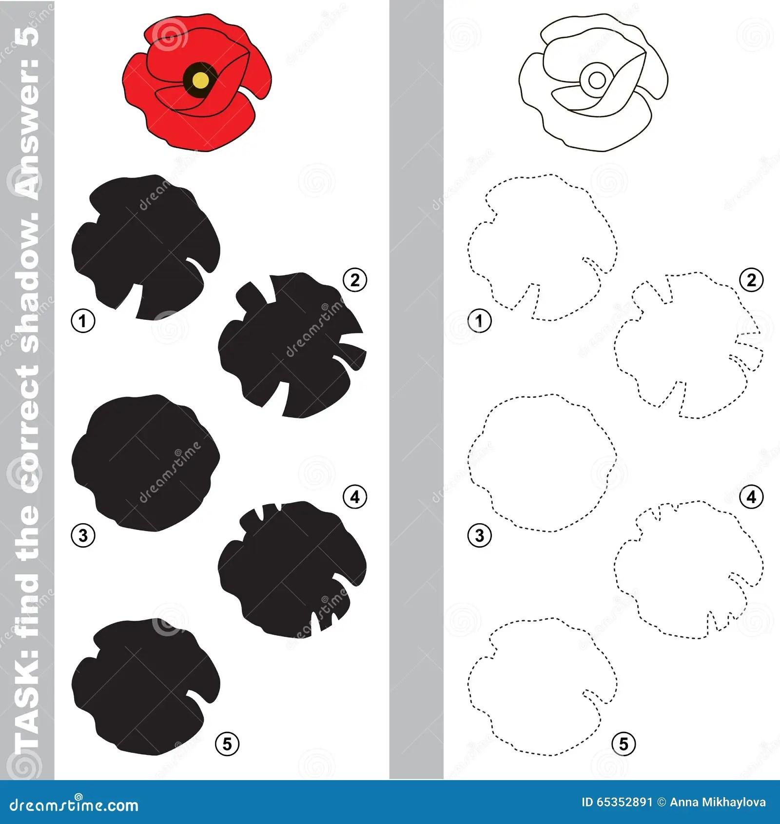 Find True Correct Shadow The Educational Kid Game Cartoon Vector