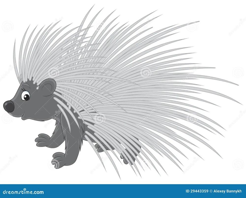medium resolution of porcupine