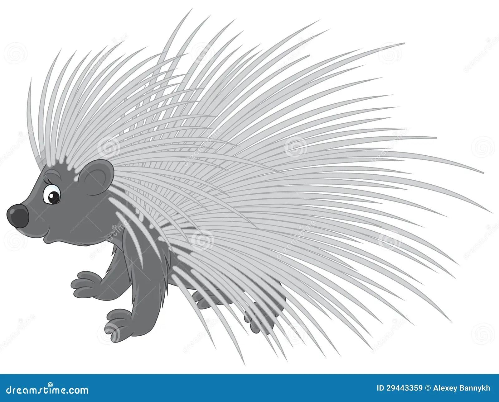 hight resolution of porcupine
