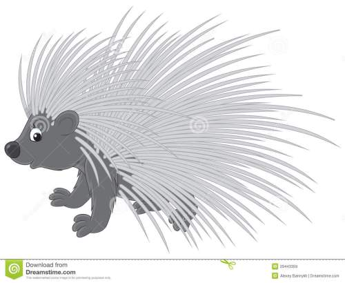 small resolution of porcupine