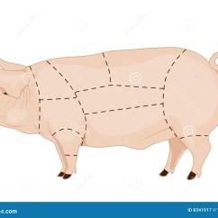 Pig Cuts Diagram Prs S2 Wiring Pork Chart Stock Illustration Of Butchery
