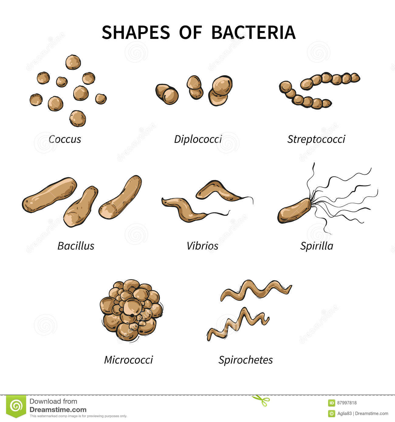Poster Shapes Of Bacteria On White Background Stock Vector