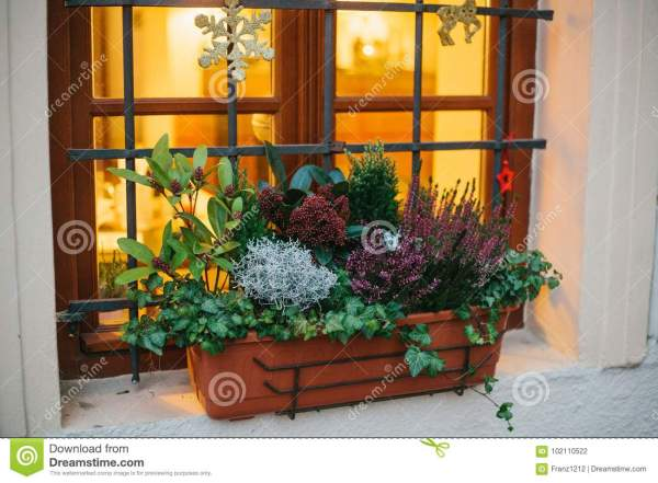 Pot Of Beautiful Plants House Window Decorated With Christmas Attributes