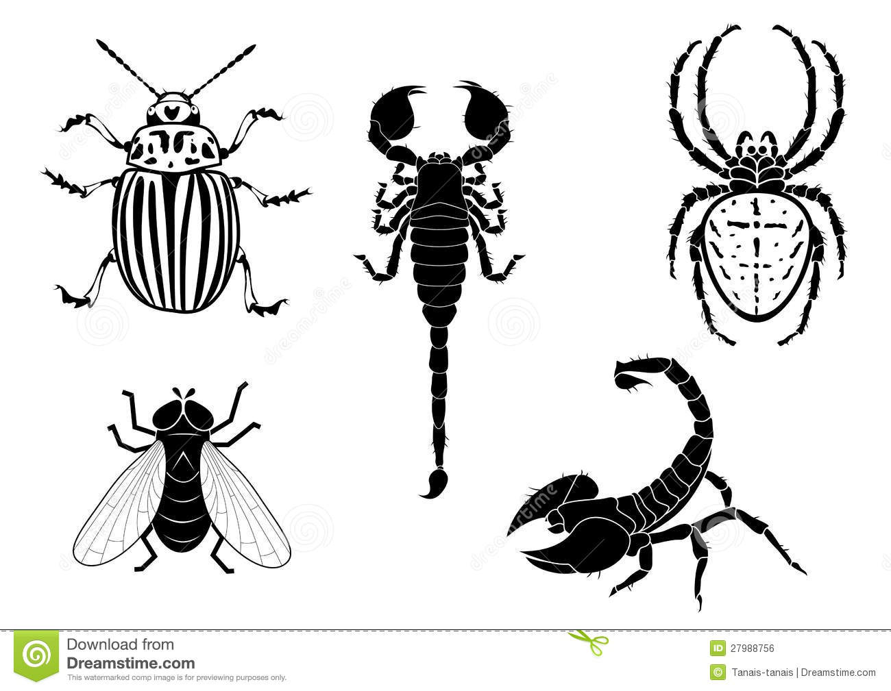 Potato Beetle Fly Scorpion And Spider Stock Vector