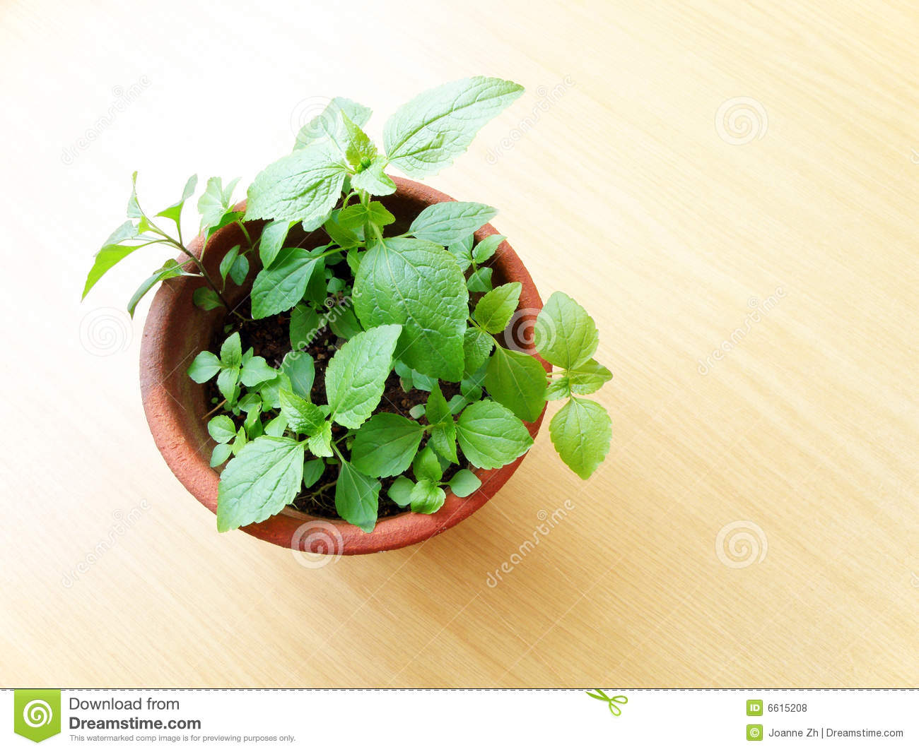 https://i0.wp.com/thumbs.dreamstime.com/z/potted-green-plant-wooden-table-6615208.jpg