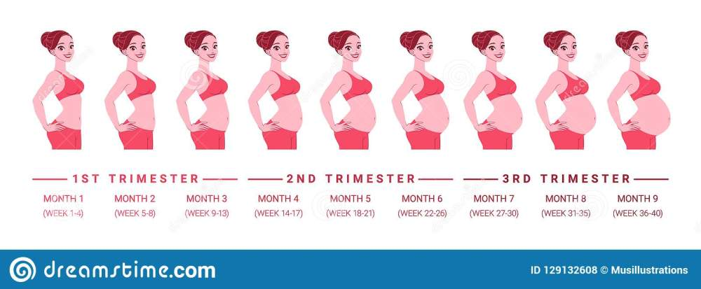 medium resolution of pregnancy development by months isolated vector illustration stock pregnant woman diagram illustration