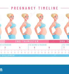 pregnancy timeline by weeks isolated vector illustration  [ 1600 x 704 Pixel ]