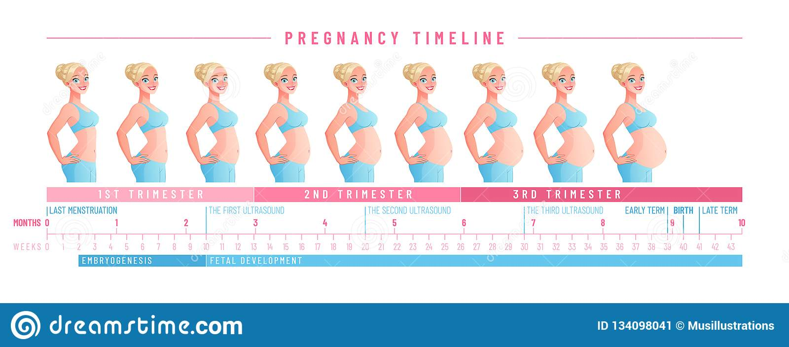 hight resolution of pregnancy timeline by weeks isolated vector illustration