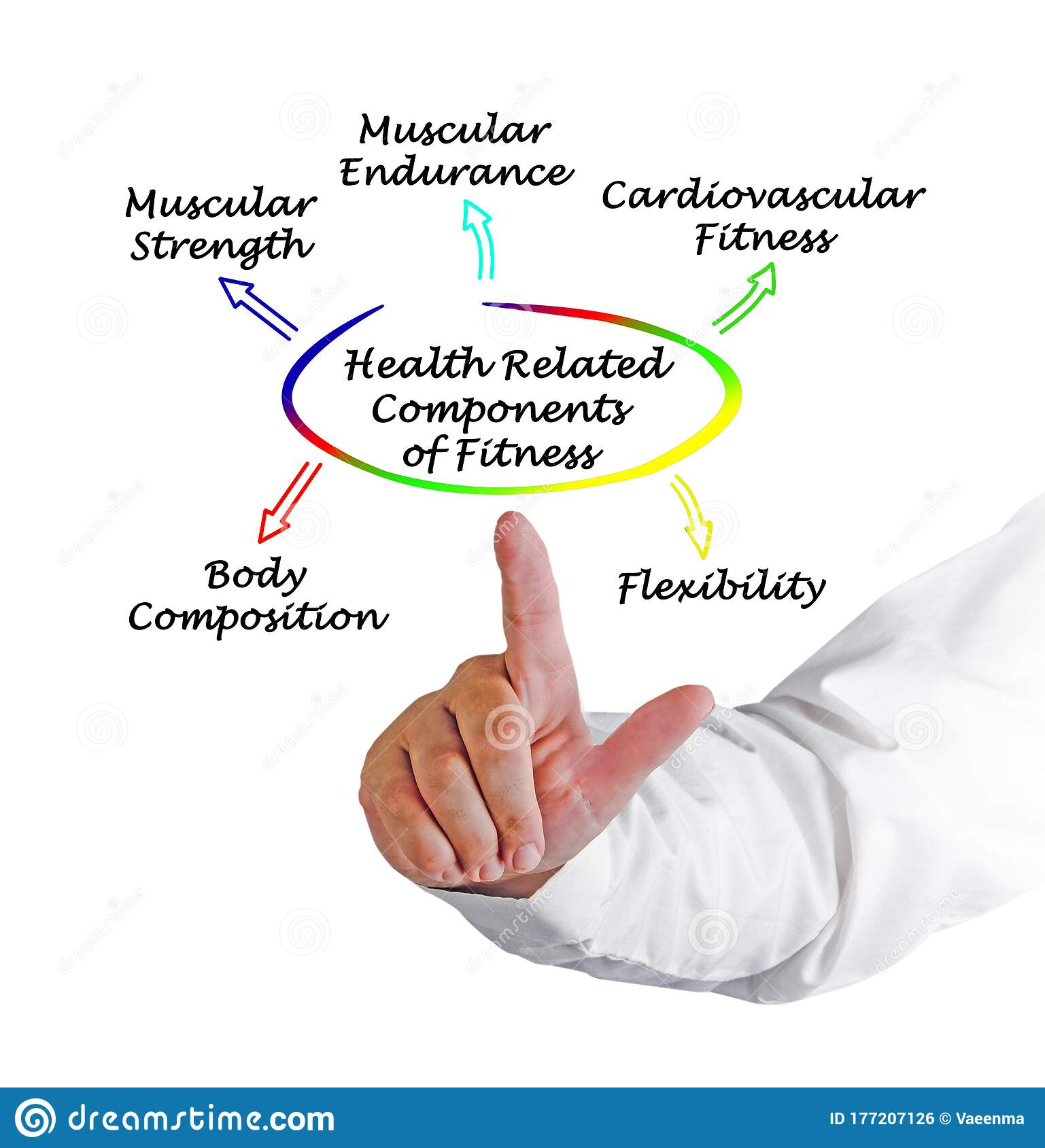 Health Related Components Of Fitness Stock Photo