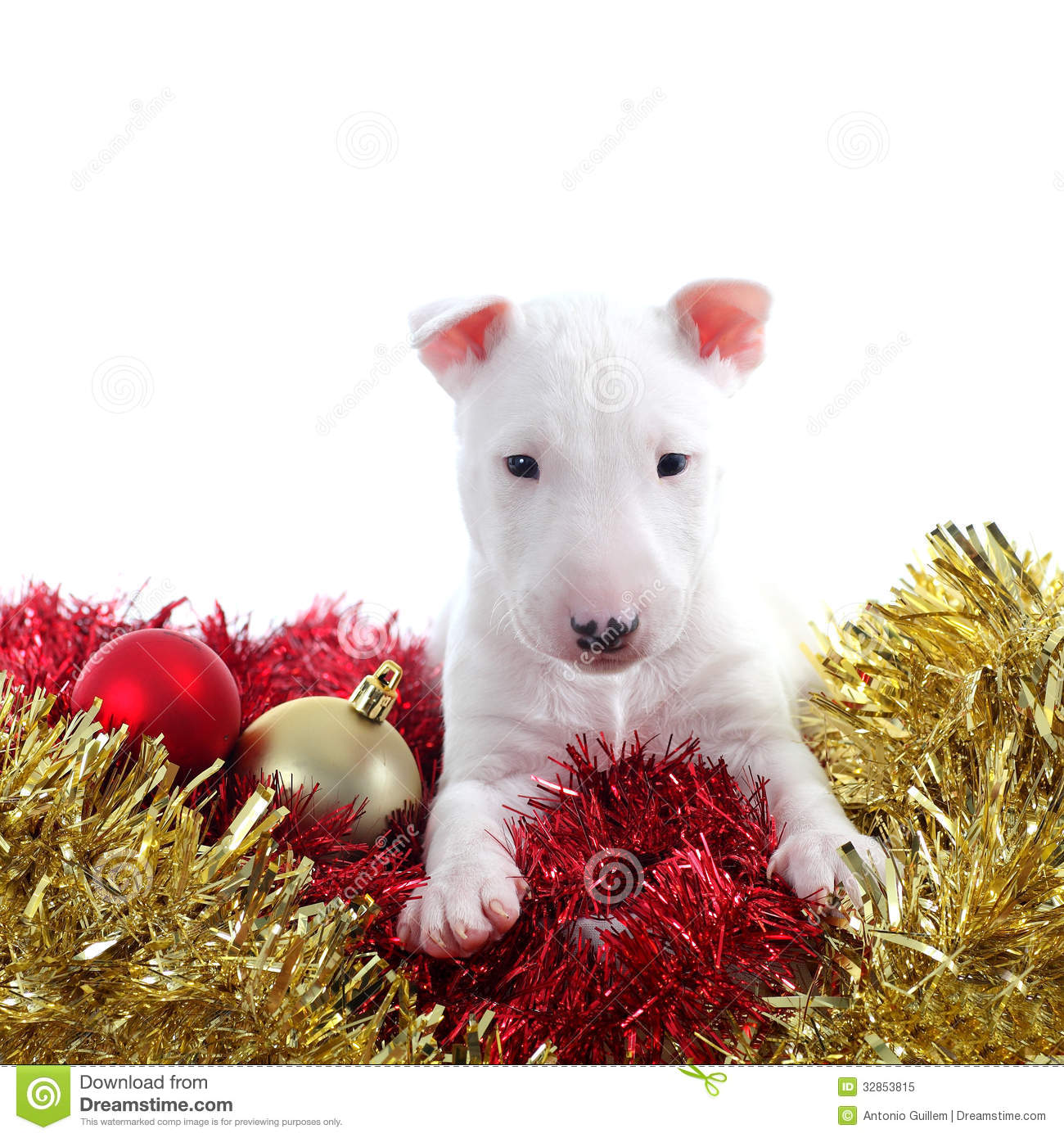Pretty Bull Terrier Pet On A Christmas Ornaments Royalty