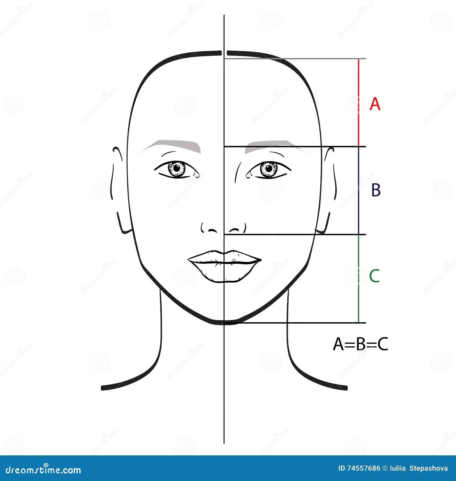 Proportions Parfaites De Visage Illustration Stock