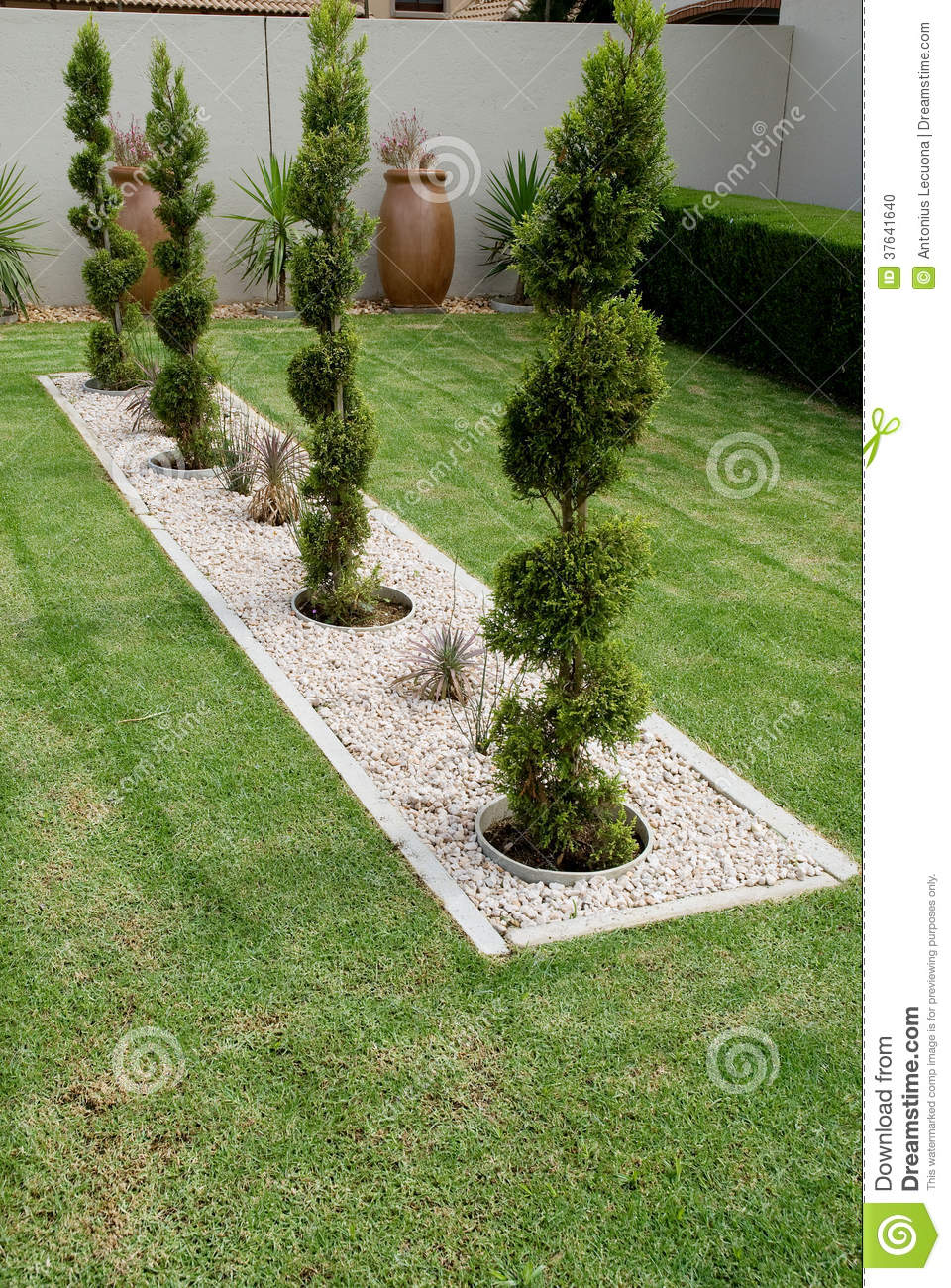 Pruned conifer shrubs stock photo Image of feature lawn