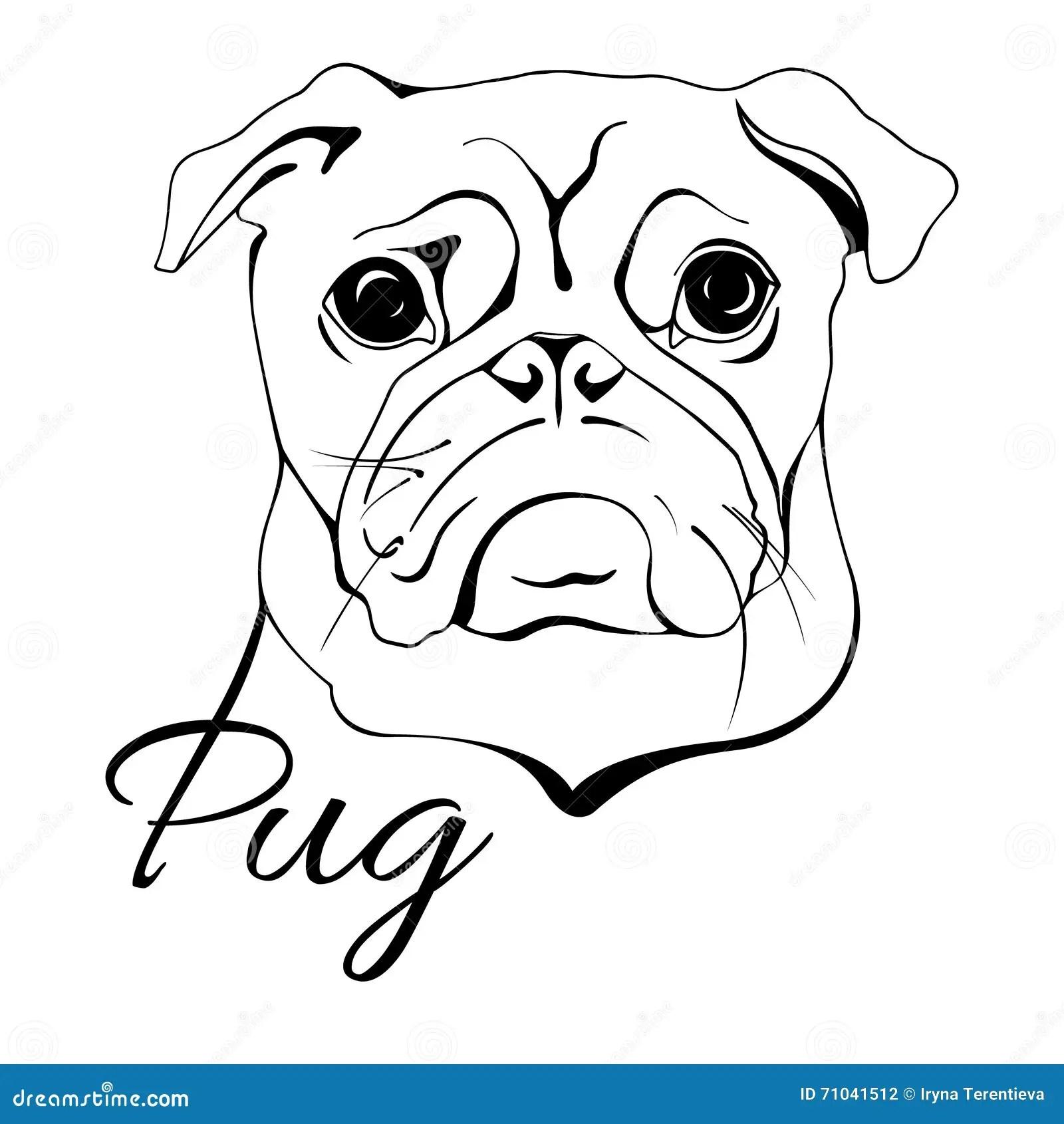 Pug Dog Head Stock Vector Illustration Of Domestic Head