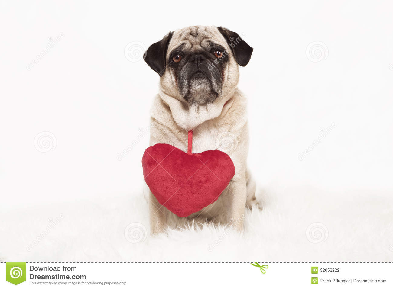 Pug With Red Heart Stock Photography Image 32052222