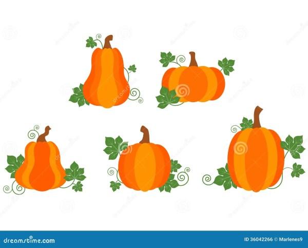 pumpkin patch stock vector. illustration