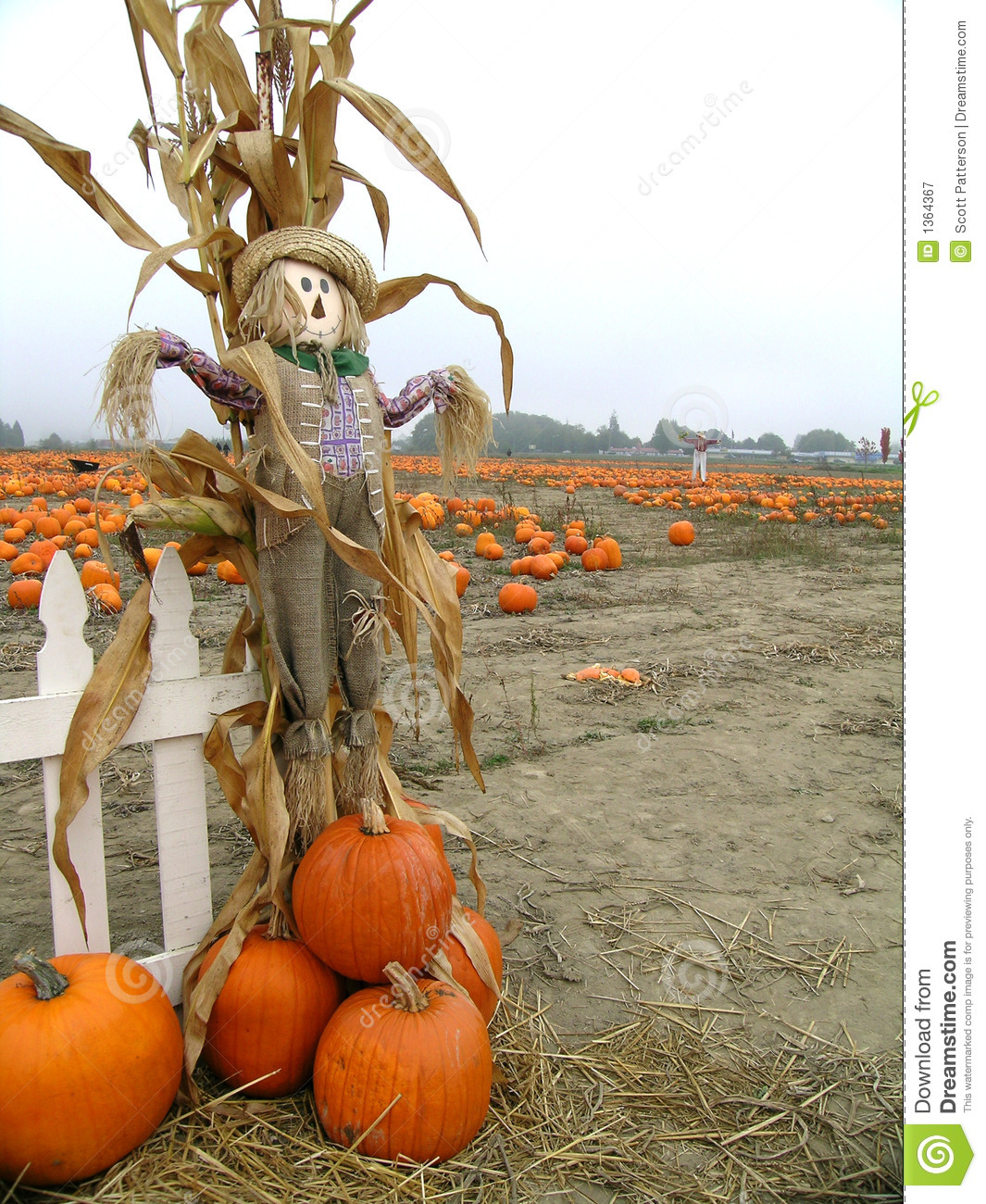Fall Pumpkin Desktop Wallpaper Free Pumpkin Scarecrow Royalty Free Stock Photography Image