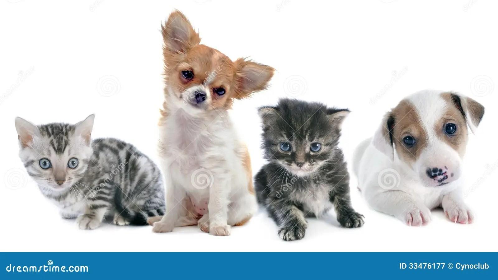 puppies and kitten stock