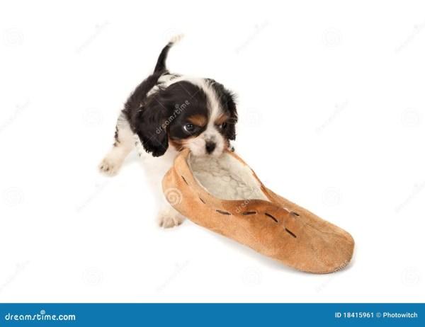 Dog Chewing Slipper