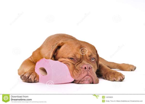 Maret 2017 Training Methods Dogs