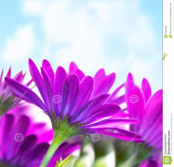 Purple Flowers Over Blue Sky Royalty Free Stock