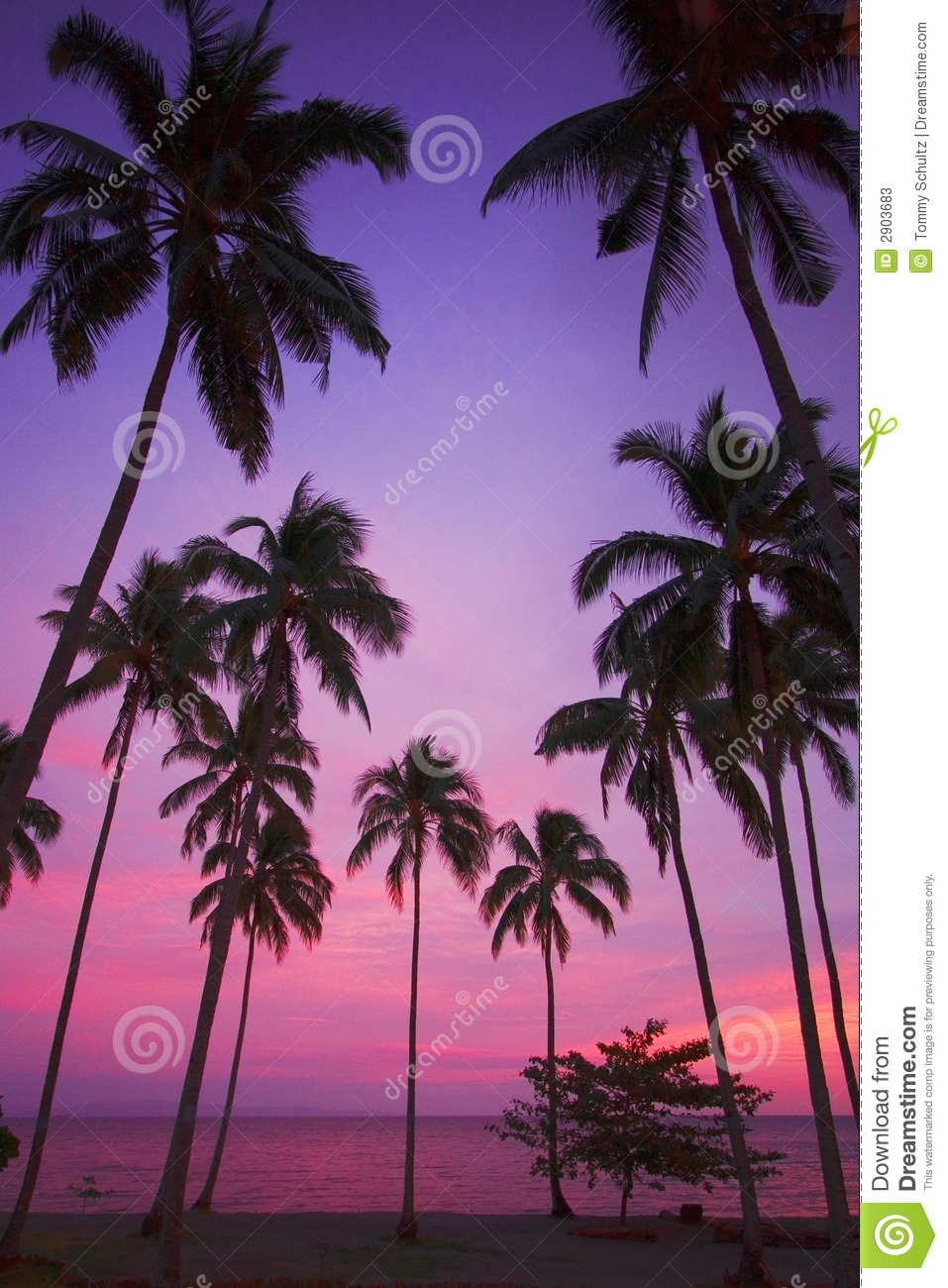 Hd Vector Wallpapers Free Download Purple Tropical Sunset Stock Image Image Of Holidays