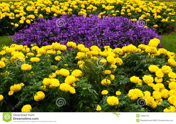 purple and yellow flower garden