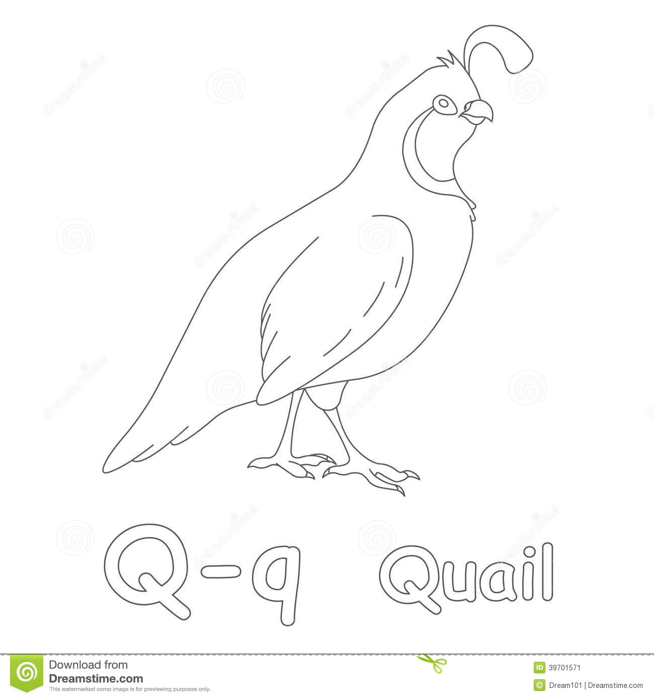 Q For Quail Coloring Page Stock Illustration Illustration