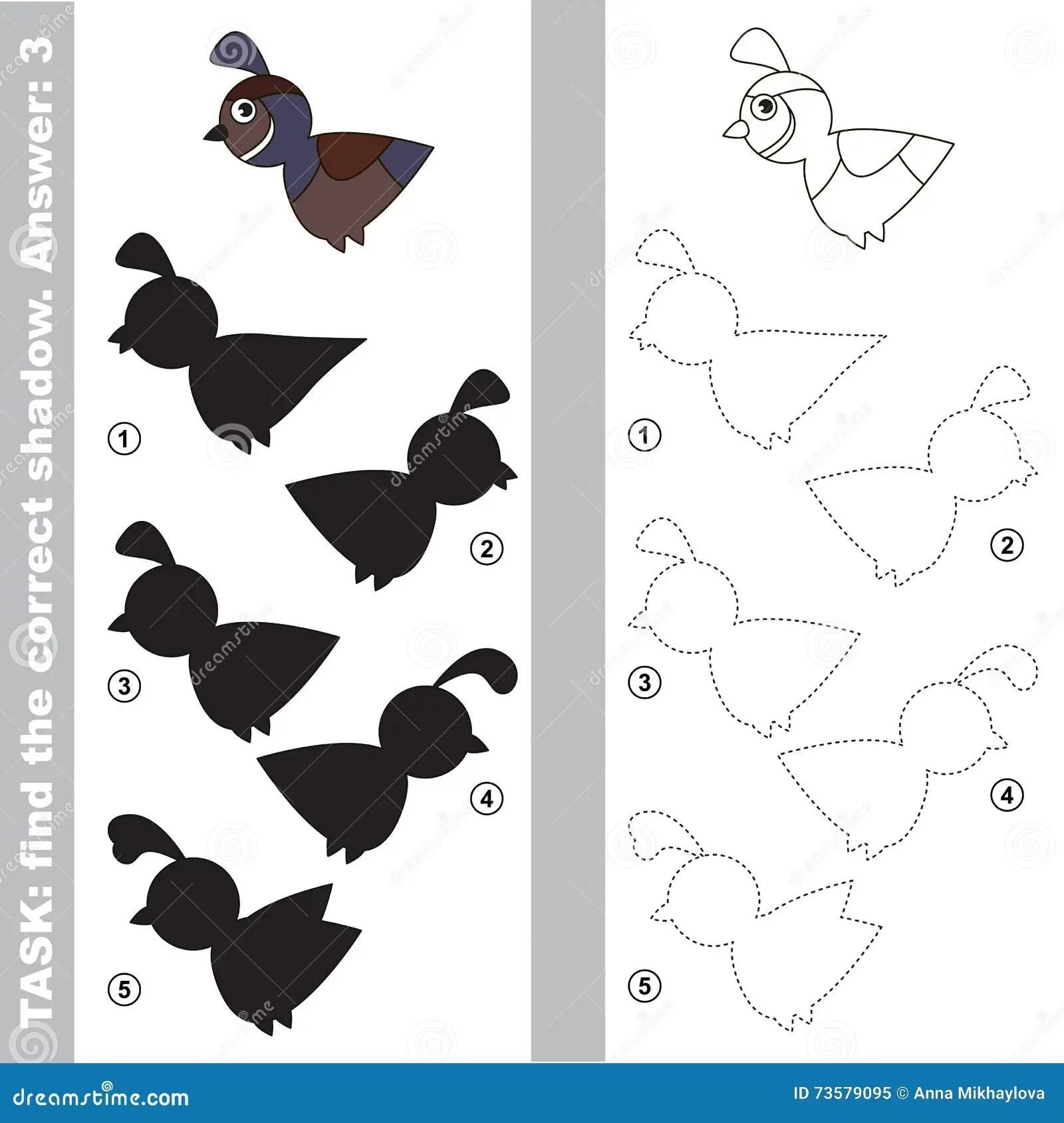 Quail Find True Correct Shadow Stock Illustration