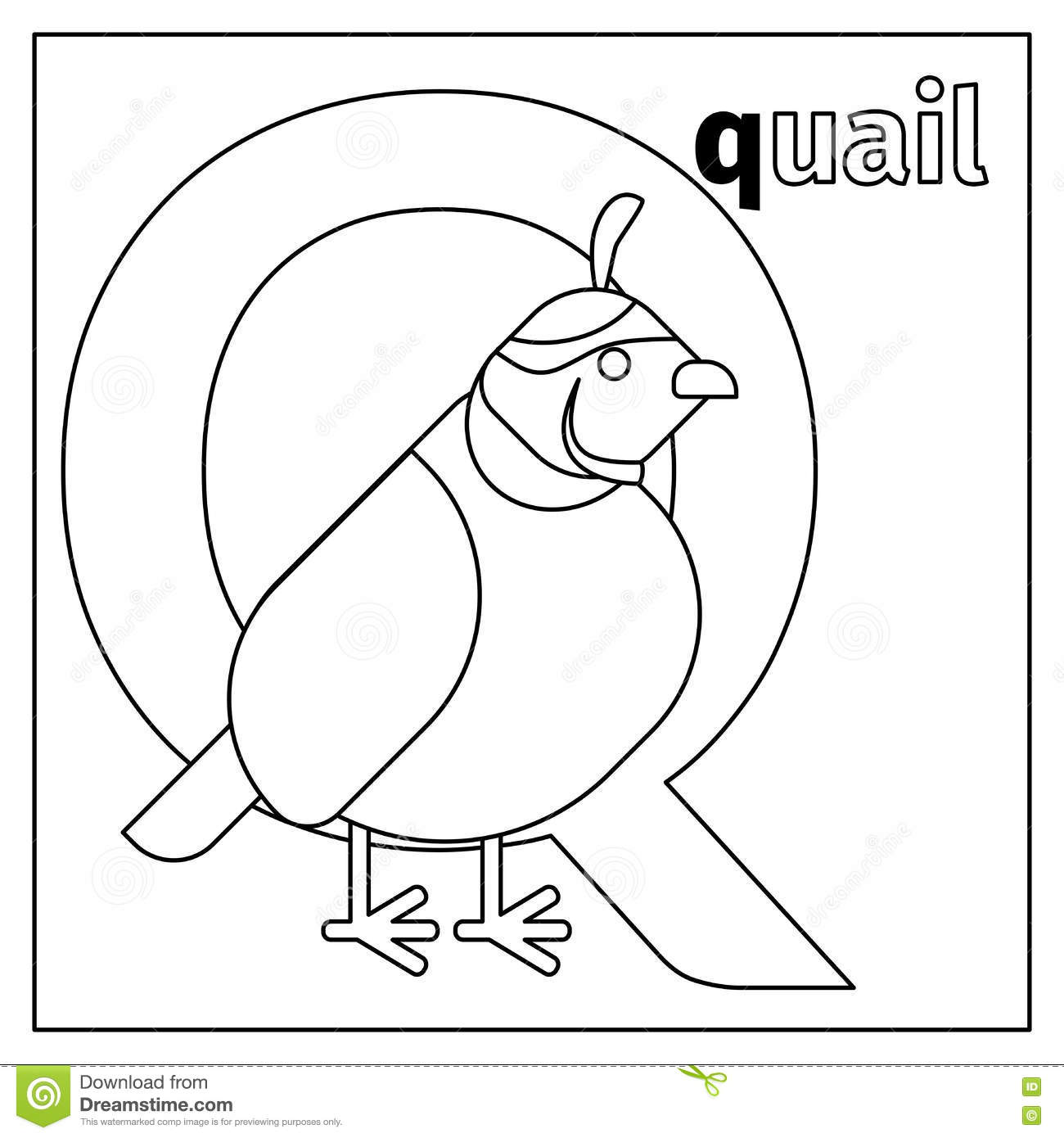 Quail Letter Q Coloring Page Stock Vector Image 79434945