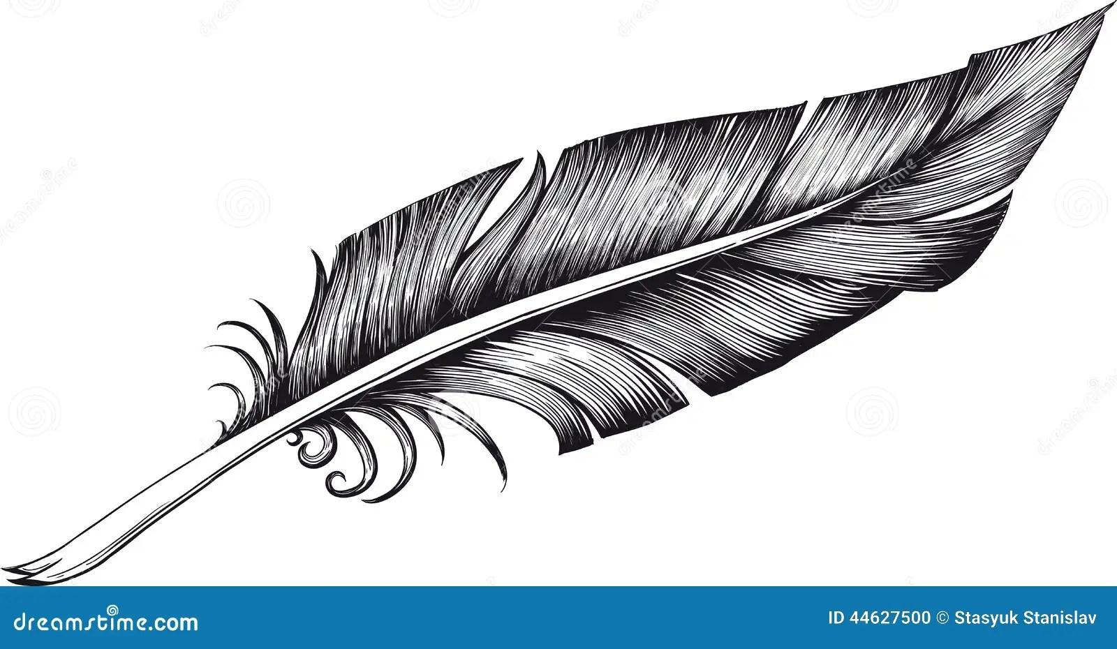 Quill Pen Illustration De Vecteur Illustration Du Nature